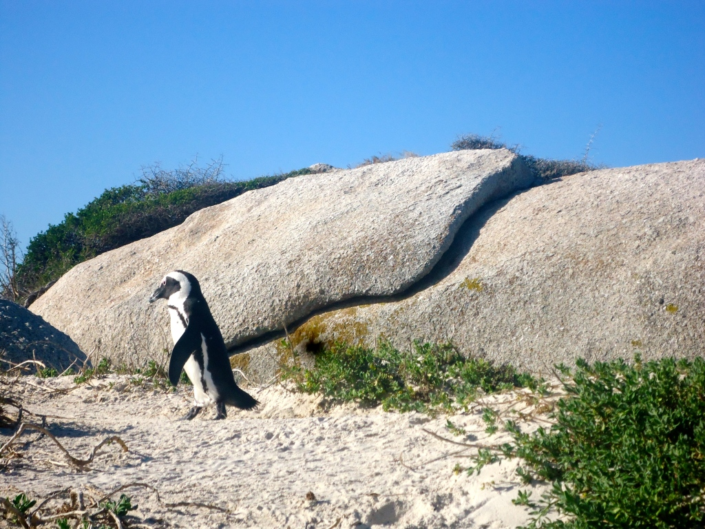 Boulders Beach, Cape Town (May 2015)